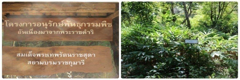 Muaeng